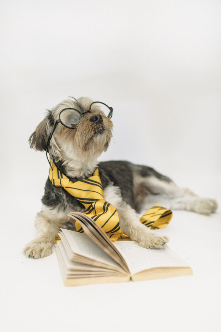 Funny puppy in eyeglasses with opened book